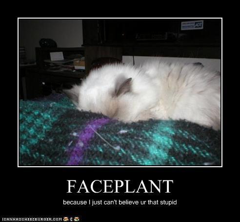 Cat Faceplant Meme